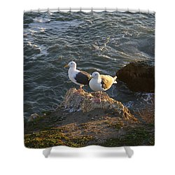 Seagulls Aka Pismo Poopers Shower Curtain by Barbara Snyder