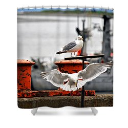 Seagulls Expression Shower Curtain by Debra  Miller