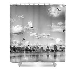 Seagulls Shower Curtain by Howard Salmon