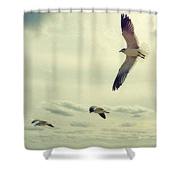 Seagulls In Flight Shower Curtain