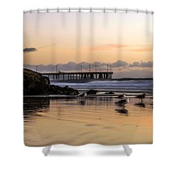 Seagulls On The Coast Shower Curtain by Mike Ste Marie