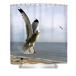 Inquisitive Seagull Shower Curtain
