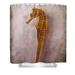 Seahorse Still Life Shower Curtain