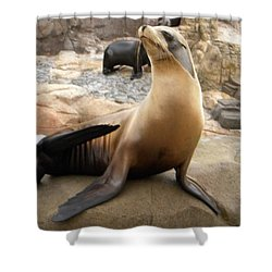 Seal In The Spotlight Shower Curtain by Amanda Eberly-Kudamik