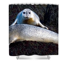 Seal Massage 5662 Shower Curtain by Brent L Ander