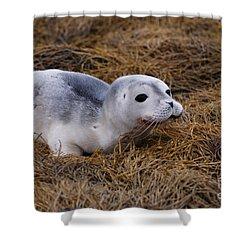 Seal Pup Shower Curtain by DejaVu Designs