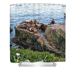 Seals And Pups Shower Curtain by Bedros Awak