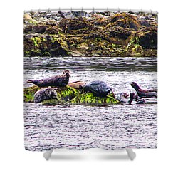Seals Resting Shower Curtain by Robert Bales