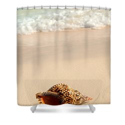 Seashell And Ocean Wave Shower Curtain
