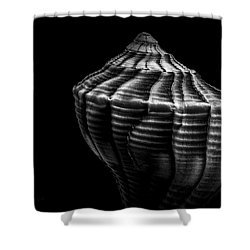 Seashell On Black Shower Curtain by Bob Orsillo