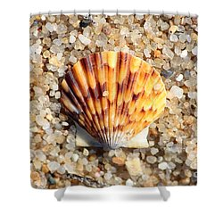 Seashell On Sandy Beach Shower Curtain by Carol Groenen