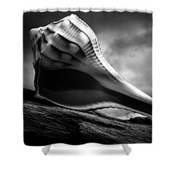 Seashell Without The Sea 3 Shower Curtain by Bob Orsillo