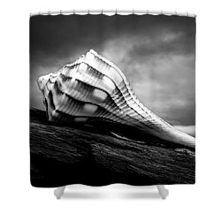 Seashell Without The Sea Shower Curtain by Bob Orsillo