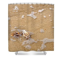 Seashells And Bubbles Shower Curtain by Kaye Menner