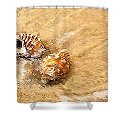 Seashells And Ripples Shower Curtain by Kaye Menner