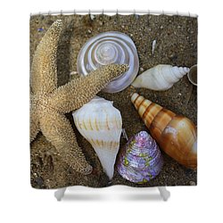 Seashells And Star Fish Shower Curtain