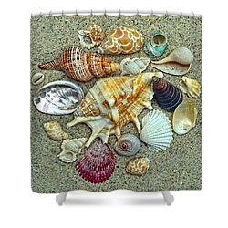 Seashells Collection Shower Curtain