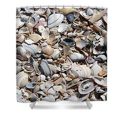 Seashells On The Beach Shower Curtain