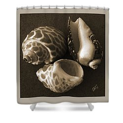 Seashells Spectacular No 1 Shower Curtain by Ben and Raisa Gertsberg