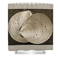 Shower Curtain featuring the photograph Seashells Spectacular No 11 by Ben and Raisa Gertsberg