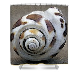 Seashells Spectacular No 2 Shower Curtain