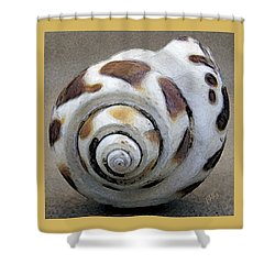 Seashells Spectacular No 2 Shower Curtain by Ben and Raisa Gertsberg