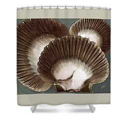 Seashells Spectacular No 22 Shower Curtain