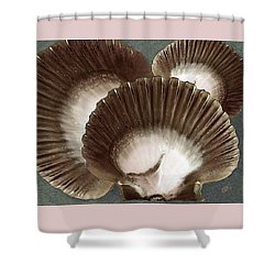 Seashells Spectacular No 22 Shower Curtain by Ben and Raisa Gertsberg
