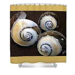 Seashells Spectacular No 23 Shower Curtain by Ben and Raisa Gertsberg