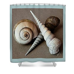 Seashells Spectacular No 24 Shower Curtain by Ben and Raisa Gertsberg