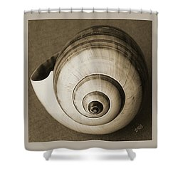 Shower Curtain featuring the photograph Seashells Spectacular No 25 by Ben and Raisa Gertsberg