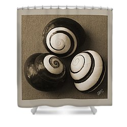 Seashells Spectacular No 28 Shower Curtain by Ben and Raisa Gertsberg