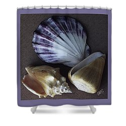 Shower Curtain featuring the photograph Seashells Spectacular No 30 by Ben and Raisa Gertsberg