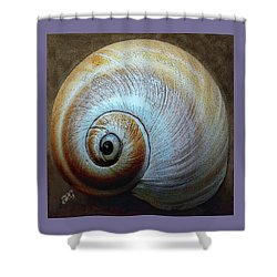 Seashells Spectacular No 36 Shower Curtain by Ben and Raisa Gertsberg