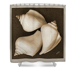 Seashells Spectacular No 4 Shower Curtain by Ben and Raisa Gertsberg