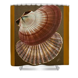 Shower Curtain featuring the photograph Seashells Spectacular No 53 by Ben and Raisa Gertsberg
