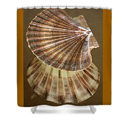 Seashells Spectacular No 54 Shower Curtain by Ben and Raisa Gertsberg