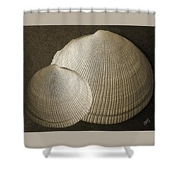 Seashells Spectacular No 8 Shower Curtain by Ben and Raisa Gertsberg