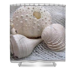 Seashells Study 1 Shower Curtain