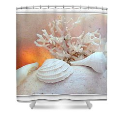 Seashells Study 3 Shower Curtain