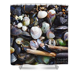 Seashells Shower Curtain by Tine Nordbred