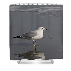 Seaside Sentinel Shower Curtain