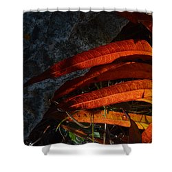 Seasonal Color Theory Shower Curtain by Brian Boyle