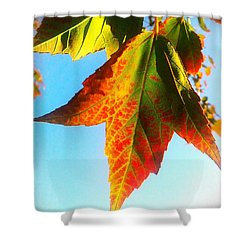 Season's Change Shower Curtain by James Aiken