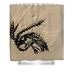 Seaweed On Beach Shower Curtain by Steven Ralser