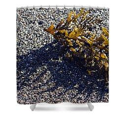 Seaweed Shadow Shower Curtain