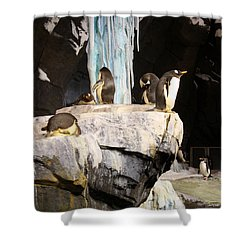 Seaworld Penguins Shower Curtain by David Nicholls