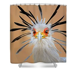 Secretary Bird Portrait Close-up Head Shot Shower Curtain