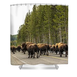 See You In Spring Shower Curtain by Yeates Photography