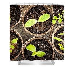 Seedlings Growing In Peat Moss Pots Shower Curtain by Elena Elisseeva